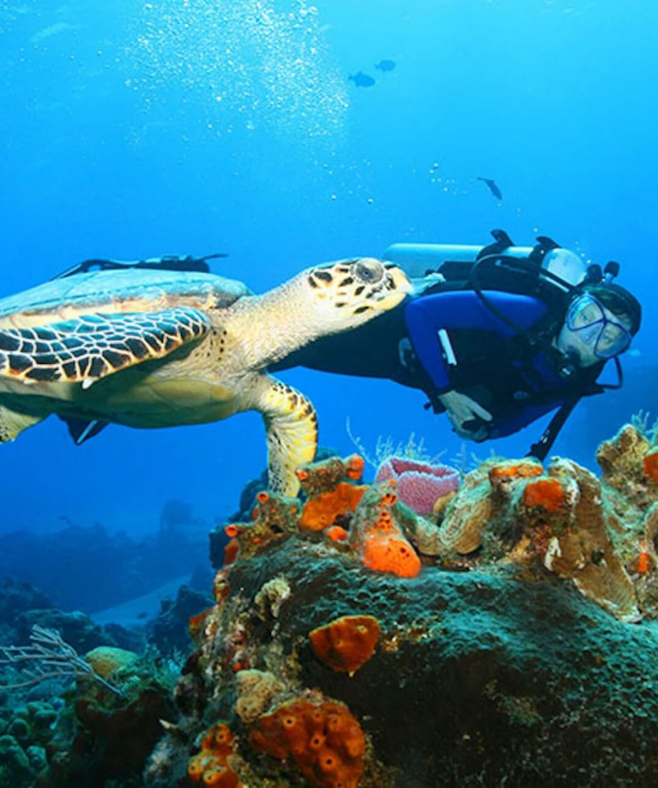 klein-curacao-dive-turtles