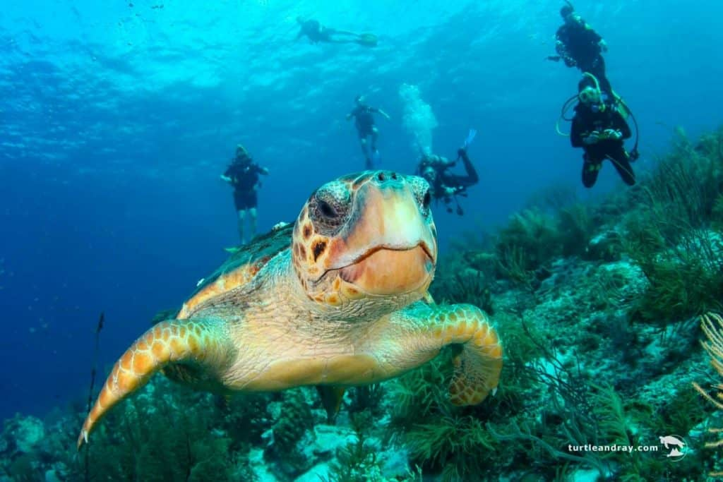 Diving on Klein Curacao – Book your Trip with Klein Curacao Deals